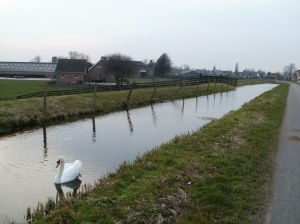 Hazerswoudse polder2